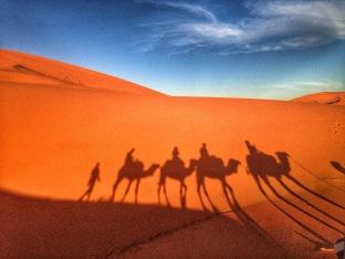 Camel riding on the Sahara Desert